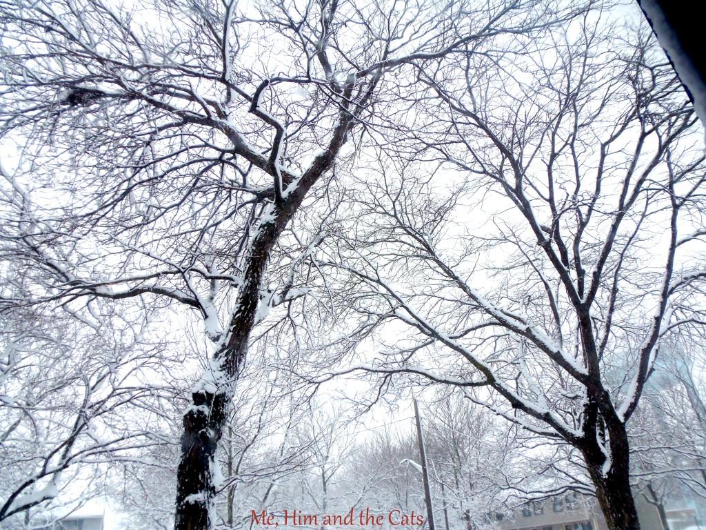 P1230136 1024x768 Wordless Wednesday: Winter Wonderland