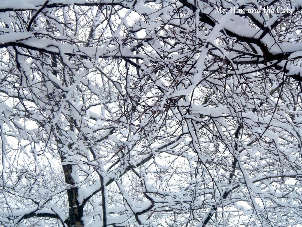 P1230138 1024x768 Wordless Wednesday: Winter Wonderland