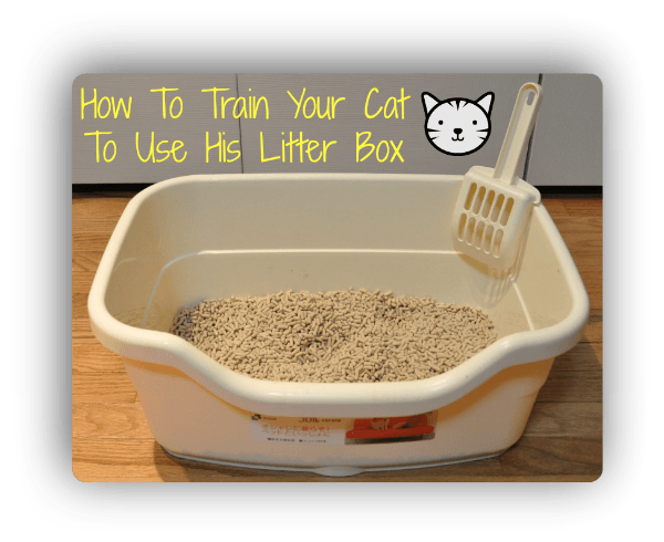 How To Litter Box Train A Cat