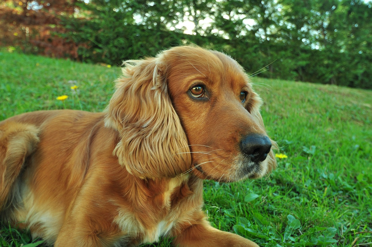 Which breeds make the best companion dogs for Best dogs for companionship